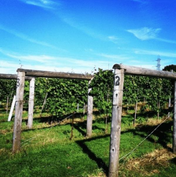 wine tasting in england west sussex bolney estate