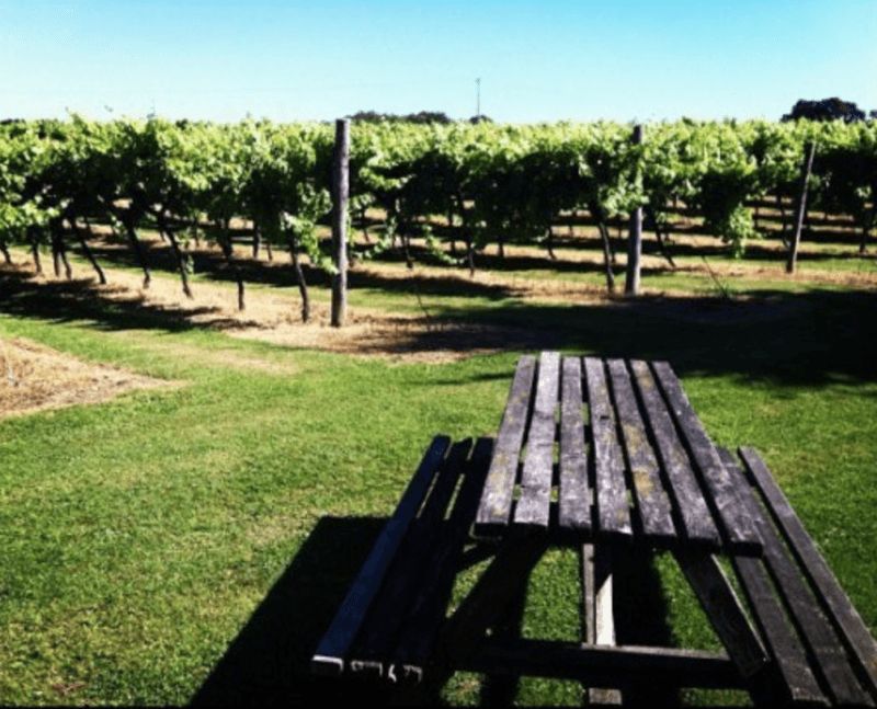 wine tasting in england west sussex bolney estate chapel down vineyards