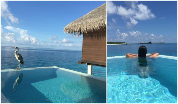 Coco Bodu Hithi Maldives Sovereign Luxury Travel Escape Water Villa Pool