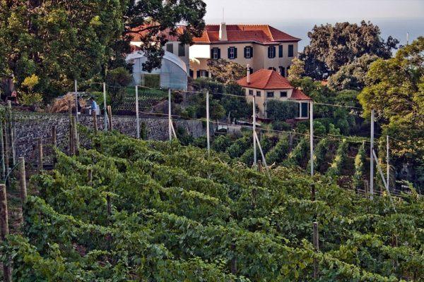 Madeira Wine Guide Blandy Quinta de Santa Luzia