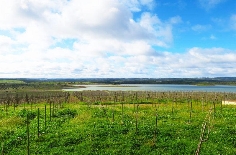 wine tourism portugal herdade do esporao wine tasting tour water