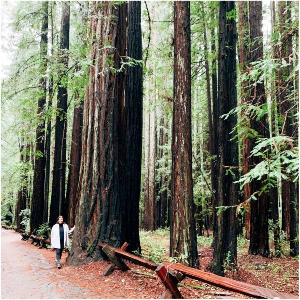 armstrong redwoods state natural reserve sonoma county california