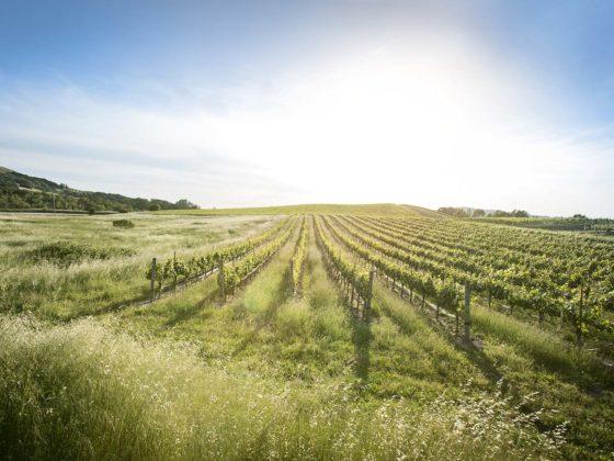 best wineries sonoma california wine tasting