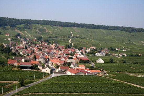 A patchwork of different champagne vineyards surround the village of Sacy, Montagne de Reims, Champagne Ardenne.