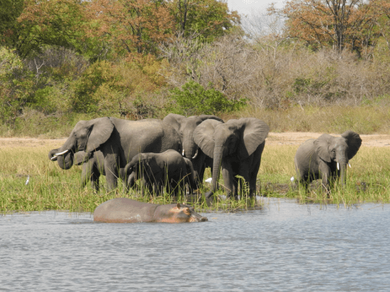 Boat Tour in Liwonde National Park by Mvuu Lodge