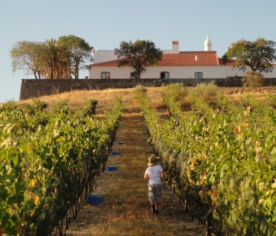 Alentejo, Portugal - It is all about the wine, and the food and the fab hospitality